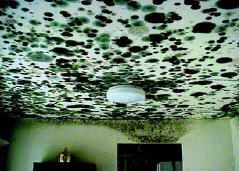 mouldy ceiling